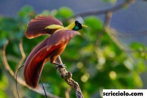 Jenis Burung Unik dan Langka Di Indonesia