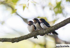 Burung Paling Cepat Migrasi di Dunia Bisa Sampai 800 Kilometer
