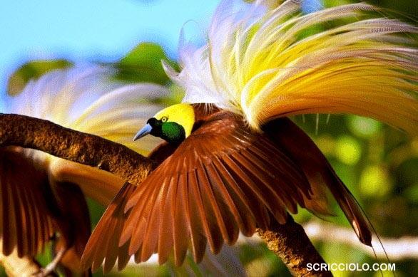 Berikut 10 Burung Endemik Terunik di Papua!