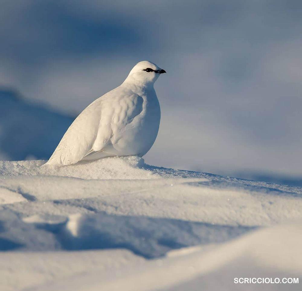 10 Burung Yang Bisa Hidup Di Suhu Ekstrim Arktika