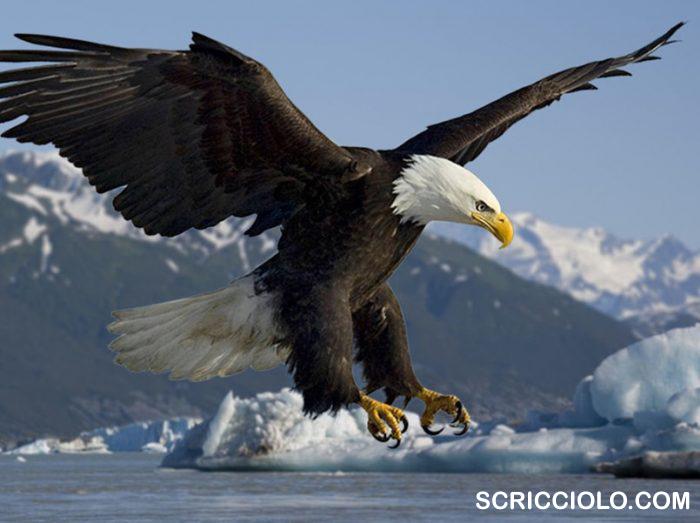 Memahami Burung Elang, Karakteristik, Dan Tipe Burung Elang
