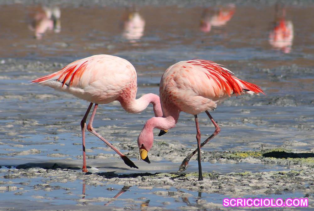 Mengenal Burung Flamingo Si Cantik Berwarna Pink