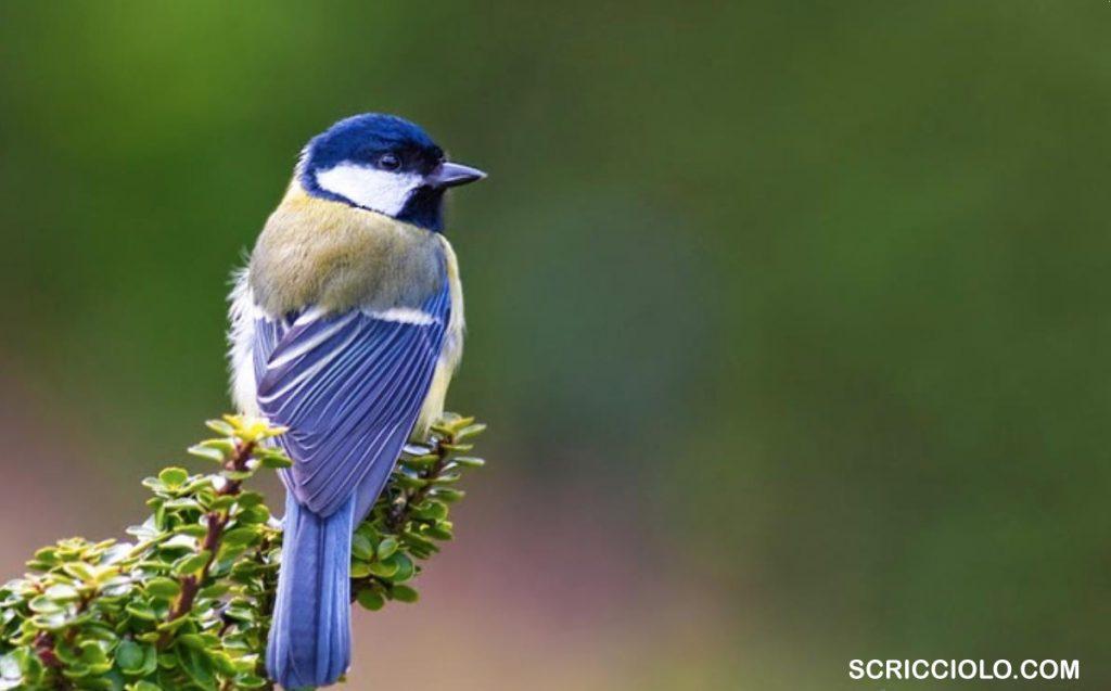 Mencari Si Burung Gelatik di Hari Batik