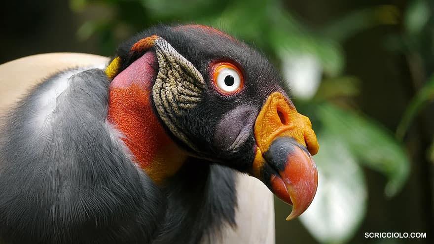 10 Burung Dengan Tampilan Yang Luarbiasa