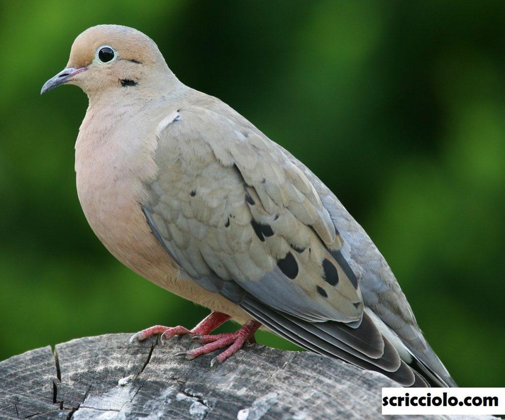 Ornithologist Merpati Unik Karolina Yang Kian Langka