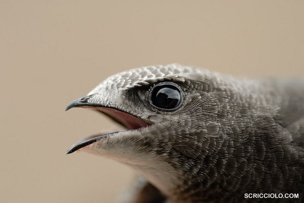 Catatan Burung Paling Tangguh Di Dunia