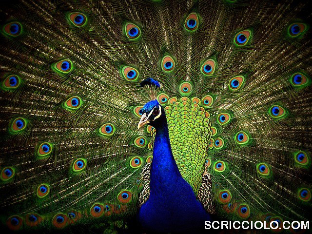 Daftar 10 Burung Tercantik Di Dunia