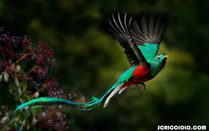20 Burung Majestic yang banyak orang ingin memilikinya